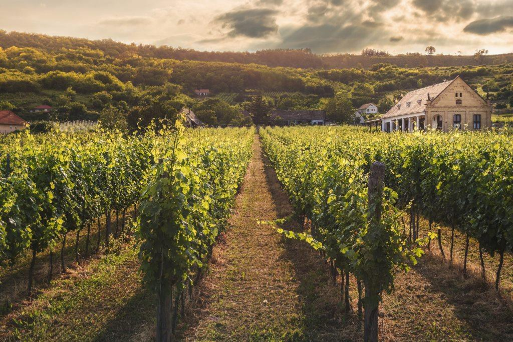 countryside wineyard